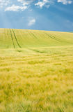 Landschaft des Feldes stockfotografie