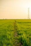 Landschaft des Feldes im ruhigen Moment Lizenzfreies Stockbild