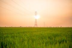 Landschaft des Feldes im ruhigen Moment Stockfoto