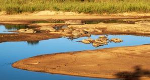 Landschaft des Flussbetts in Afrika lizenzfreies stockbild