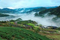 Landschaft des frühen Morgens von Teegärten in der neuen Frühlingsatmosphäre mit ätherischem Nebel im Tal Lizenzfreies Stockfoto