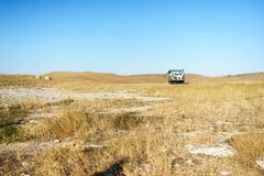 Landschaft des gelben Feldes mit Steinen Lizenzfreie Stockbilder