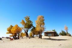 Landschaft des goldenen Falles Lizenzfreie Stockfotos