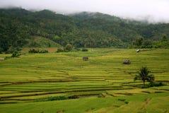 Landschaft des goldenen Reisfeldes Lizenzfreies Stockbild