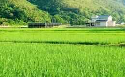 Landschaft des grünen Bauernhofes und des kleinen Dorfs Stockbilder