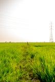 Landschaft des grünen Feldes im ruhigen Moment Stockbild