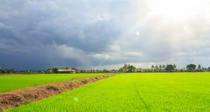 Landschaft des grünen Feldes mit Sonnenstrahlen und -Blendenfleck Lizenzfreie Stockfotografie
