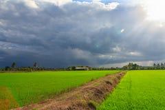 Landschaft des grünen Feldes mit Sonnenstrahlen und -Blendenfleck Lizenzfreie Stockbilder