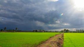 Landschaft des grünen Feldes mit Sonnenstrahlen und -Blendenfleck Stockfotos