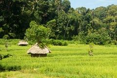 Landschaft des grünen Feldes und wenigen Dorfs lizenzfreies stockbild