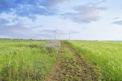 Landschaft des grünen Gerstenfeldes Stockbilder