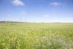Landschaft des grünen Gerstenfeldes Stockfoto