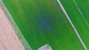 Landschaft des grünen Reisbauernhoffeldes und -bahn in Thailand; 4K 30fps, von der Luftdraufsicht 90 Grad stock video footage