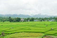 Landschaft des grünen Reises mit Kornfeld in der Regenzeit mit Berg Lizenzfreies Stockfoto