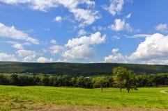 Landschaft des grünen Waldes Lizenzfreie Stockfotografie