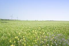 Landschaft des grünen Gerstenfeldes und des gelben Canola blüht Stockfotos