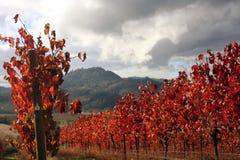 Landschaft des Herbst-Weinbergs Lizenzfreie Stockfotografie