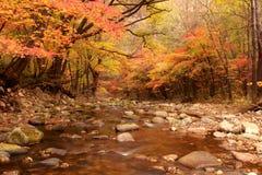 Landschaft des Herbstahornholzes lizenzfreies stockbild