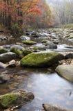 Landschaft des Herbstahornholzes lizenzfreies stockfoto