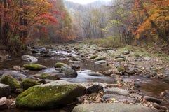 Landschaft des Herbstahornholzes stockfotos