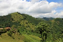 Landschaft des Kaffees und der Unterwasserbananen in der wachsenden Region des Kaffees nahe EL Jardin, Antioquia, Kolumbien lizenzfreies stockfoto