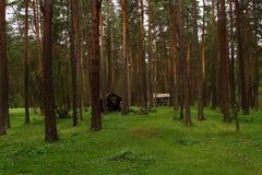 Landschaft des Koniferenwaldes Stockbild