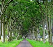 Landschaft des Korridors der Bäume Lizenzfreies Stockbild