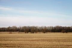 Landschaft des ländlichen Feldes im Vorfrühling mit Wald hinten Lizenzfreie Stockfotografie