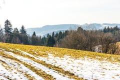 Landschaft des Landwirtschaftsfeldes und -wiese Vorbereitung für Frühling Bäume nahe der Straße, blauer Himmel Stockfoto