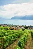 Landschaft des Lavaux-Weinberg-Terrassenwanderwegs in der Schweiz Stockfoto
