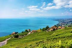 Landschaft des Lavaux-Weinberg-Terrassenwanderwegs von der Schweiz Stockbild