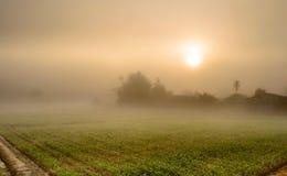 Landschaft des Mais-Landwirtschafts-Feldes und des Sonnenaufgangs im Nebel Lizenzfreie Stockfotografie