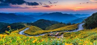 Landschaft des mexikanischen Sonnenblumenfelds lizenzfreie stockfotografie