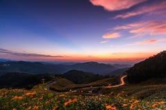 Landschaft des mexikanischen Sonnenblumenfelds stockfoto