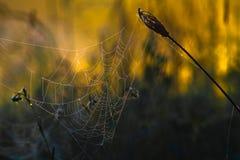 Landschaft des Morgensonnenaufgangs Lizenzfreie Stockbilder