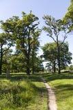 Landschaft des Richmond-Parks lizenzfreie stockbilder