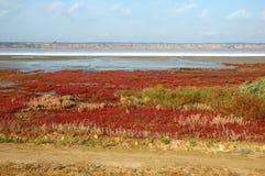 Landschaft des Salzes Kuyalnicky liman, Odessa, Ukraine stockbilder