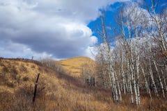 Landschaft des schöne Glenbow-Ranch-provinziellen Parks in Alberta stockfotos