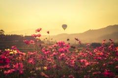 Landschaft des Schönheitskosmos blüht und die Ballone, die in den Himmel während der Sonnenuntergang Weinlese-Ausgabe schwimmen stockfotos