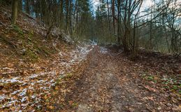 Landschaft des späten herbstlichen Waldes mit erstem Schnee Stockbild