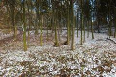 Landschaft des späten herbstlichen Waldes mit erstem Schnee Lizenzfreie Stockfotos
