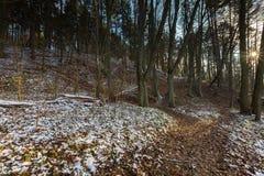 Landschaft des späten herbstlichen Waldes mit erstem Schnee Lizenzfreies Stockfoto