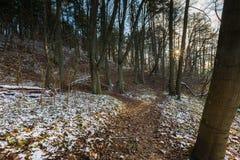 Landschaft des späten herbstlichen Waldes mit erstem Schnee Stockfotos