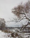 Landschaft des Spätherbsts mit einer alten Weide auf der schneebedeckten Bank von einem gefrorenen See Stockfoto