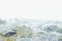 Landschaft des verschneiten Winters stockbild