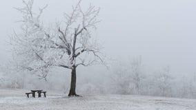 Landschaft des verschneiten Winters mit Baum und einer Bank Lizenzfreie Stockfotos