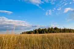 Landschaft des Wald- und der Felderblauen Himmels Lizenzfreies Stockbild