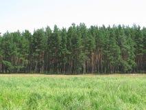 Landschaft des Waldes Stockfoto
