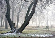 Landschaft des Waldes im Nebel Stockfotos