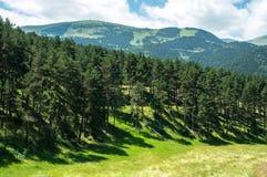 Landschaft des Waldes und der Pyrenäen-Berge lizenzfreie stockfotos